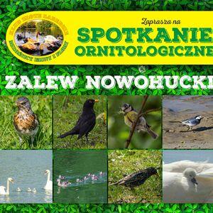 Spotkanie ornitologiczne 2 – 2017